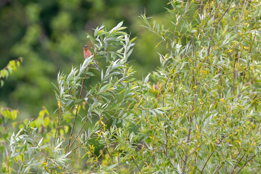 Identifié (Pinson des arbres, grand cormoran, bergeronnette grise) Portfo24