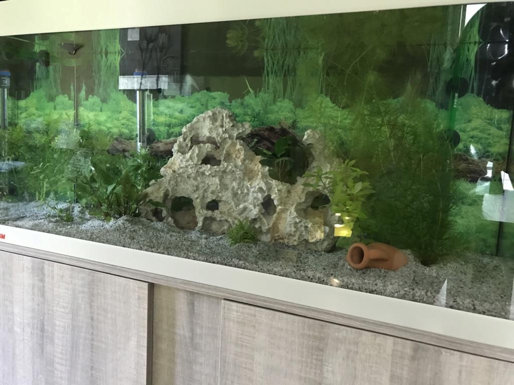 Mon premier aquarium Aquari13