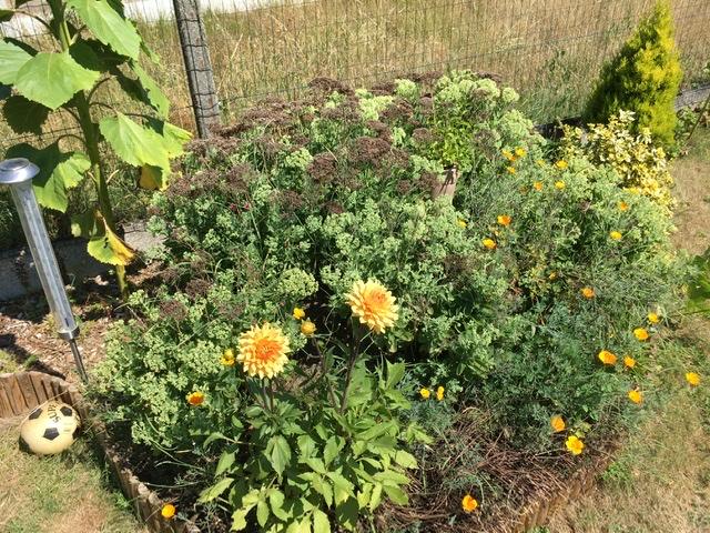 Gagner en autonomie (jardin, habitat, durabilité, recyclage, réparations, inventions) - Page 2 Ff2b8410
