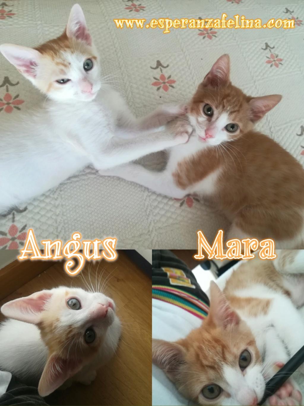 Mara y Angus, hermanitos divertidos buscan familia (Alava-España f.n.aprox 08/04/19) Photos11