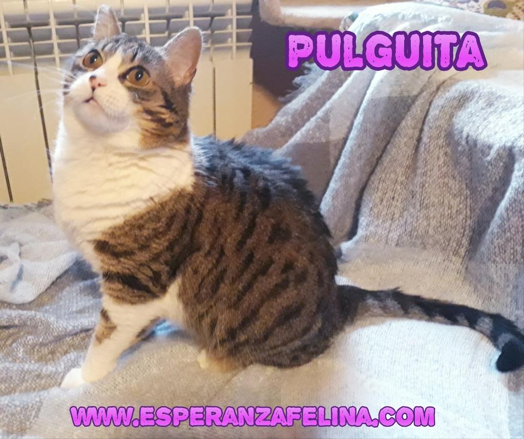 Pulguita, preciosa y mimosa gatita busca hogar. (F.N: 15/05/2012) (Positiva a inmuno + Leucemia) Álava. Photos12