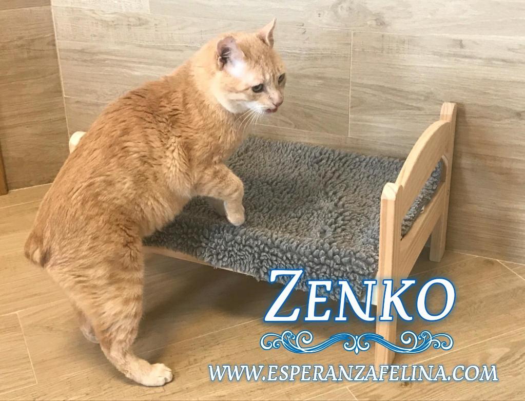 Zenko, precioso rubio en adopción. (F.N aprox: 15/01/2013) (Positivo a inmuno) Álava. Photos13