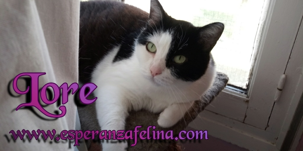 Lore, preciosa vaquita luchadora en adopción (Álava, F.N aprox. 2/04/12) Photos16