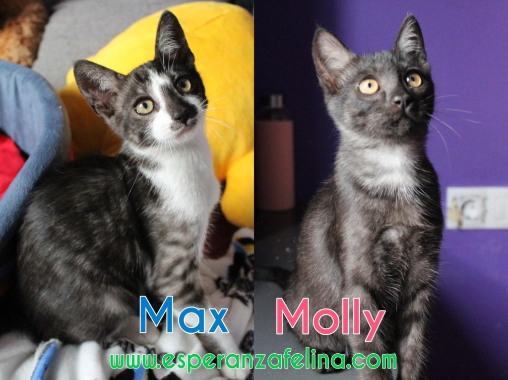 Max y Moli, preciosos hermanitos en adopción (Álava-España f.n.aprox 08/05/19)  Photos18
