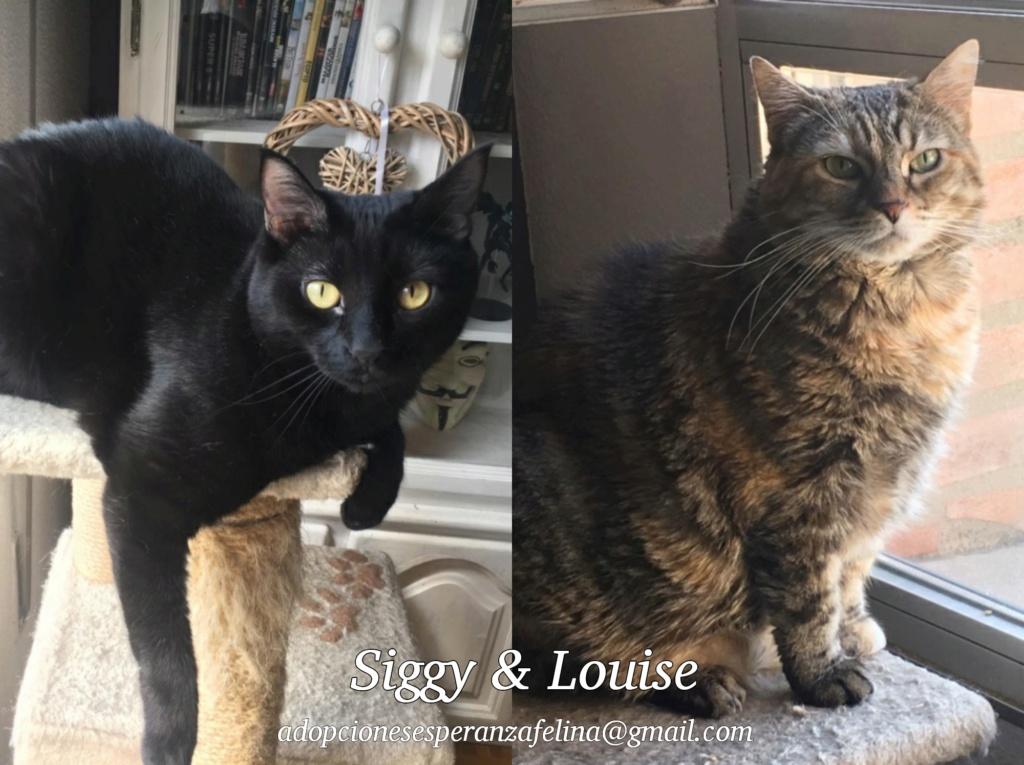 SIGGY Y LOUISE, en adopción. Álava (F.N. aprox: 22/07/2015 y 1/1/2011) Photos19