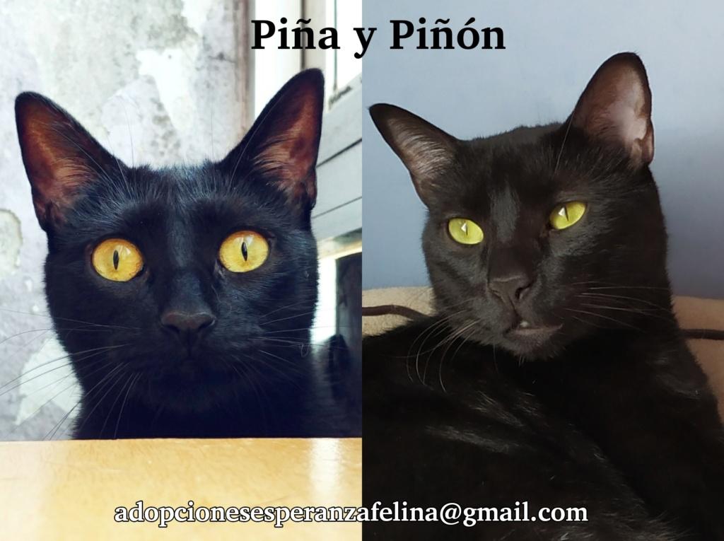 Piña y Piñón, parejita de negruchis en adopción (Alava, Fecha de nacimiento aprox.: 06/09/2017) Photos20