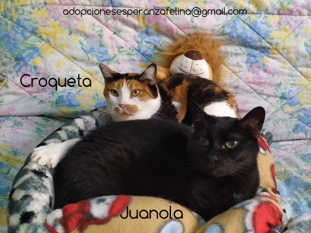 Croqueta y Juanola, preciosas abuelitas buscan hogar. Alava (FN: 02/08/2006; 14/06/2006) Photos25