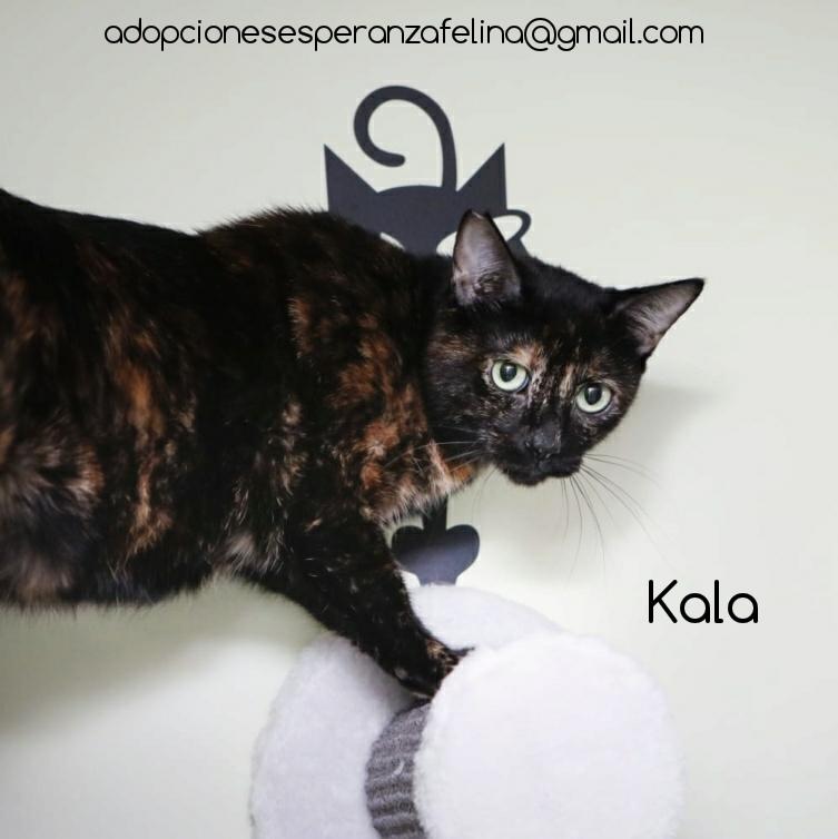 Kala, preciosa carey (Fec. Nac. Aprox. 01/01/2017) Photos28