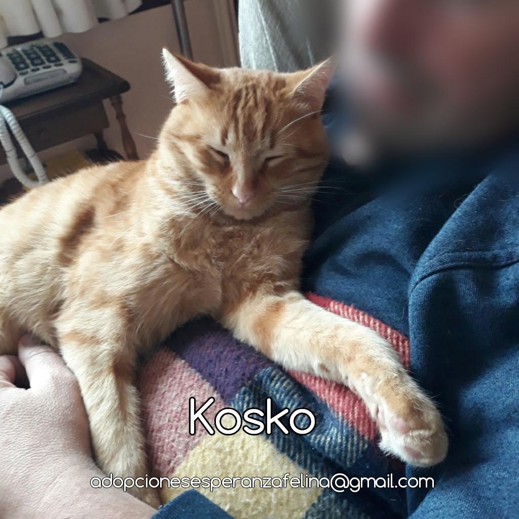 Kosko, rubiales en busca de hogar. (F. N. Aprox. 22/08/2018 Álava, Esp.) Photos30
