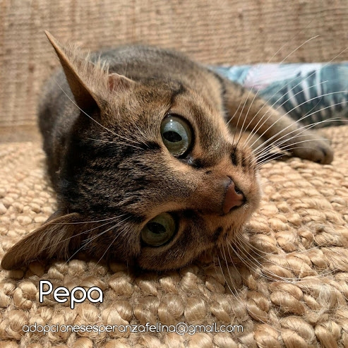 Pepa,preciosa gatita necesita hogar (f.n.aprox 28/04/13) Photos31