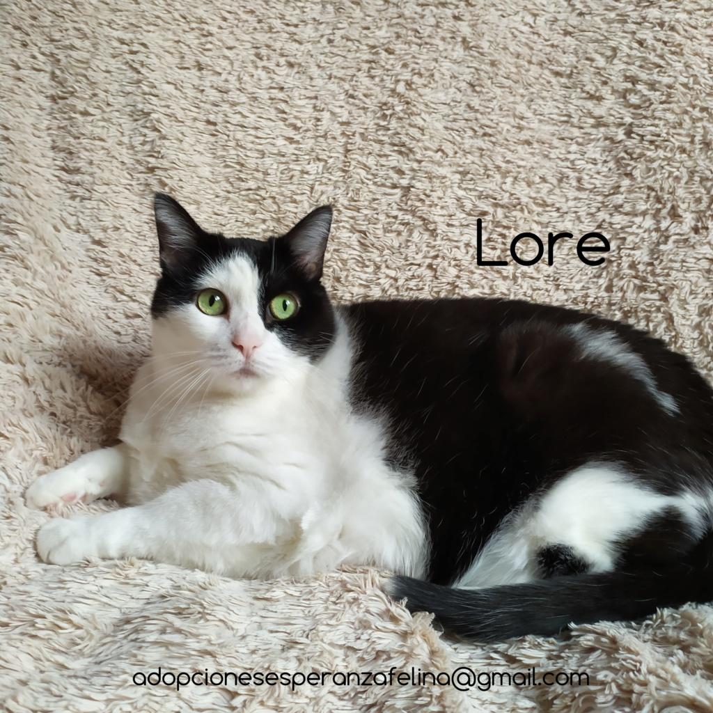 Lore, preciosa vaquita luchadora en adopción (Álava, F.N aprox. 2/04/12) Photos33