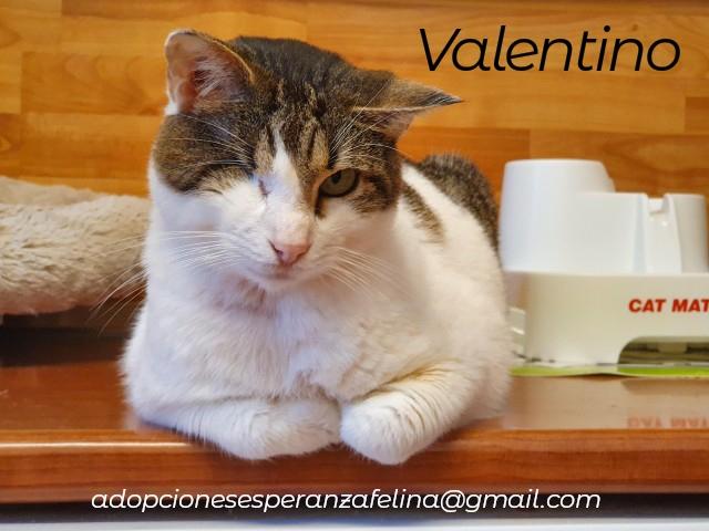 Valentino, gatito muy especial busca hogar. +INMUNO. Álava (F.N aprox. 14/11/2012) Photos37