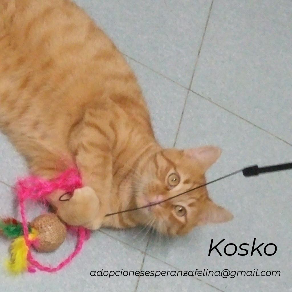 Kosko, rubiales en busca de hogar. (F. N. Aprox. 22/08/2018 Álava, Esp.) Photos38