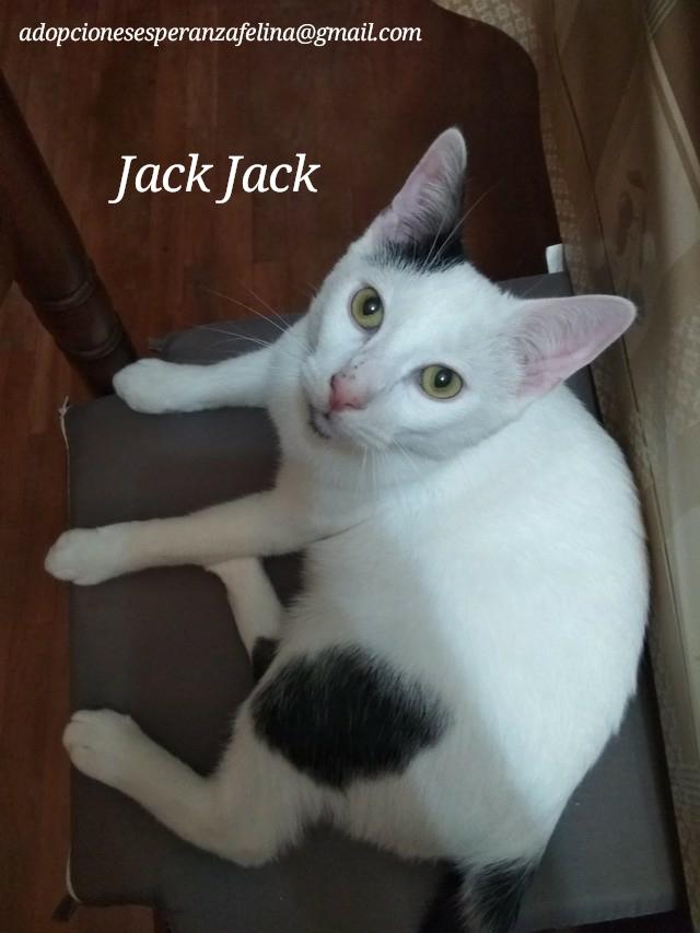 Jack-Jack, gatete en adopción. Álava-España (F.N: 05/2019) Photos40