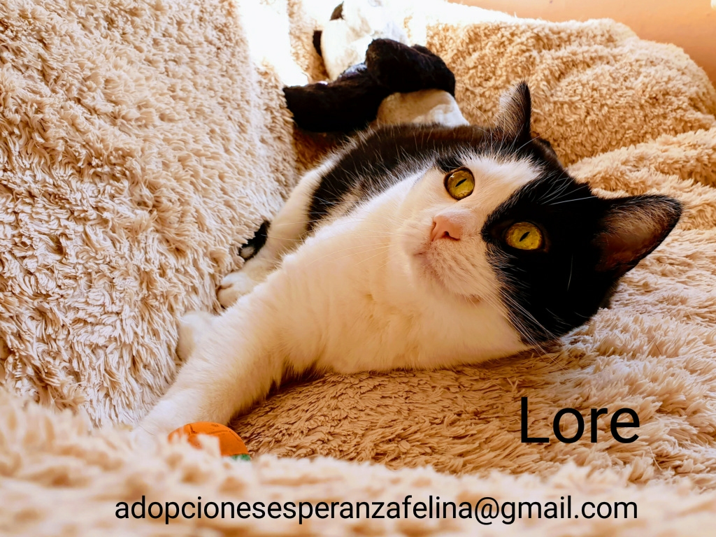 Lore, preciosa vaquita luchadora en adopción (Álava, F.N aprox. 2/04/12) Photos41
