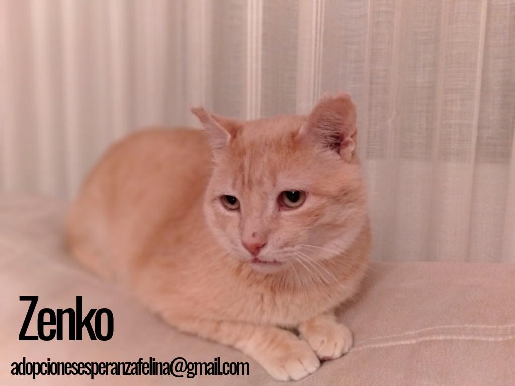 Zenko, precioso rubio en adopción. (F.N aprox: 15/01/2013) (Positivo a inmuno) Álava. - Página 2 Photos47