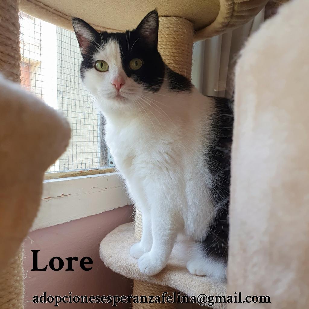 Lore, preciosa vaquita luchadora en adopción (Álava, F.N aprox. 2/04/12) - Página 2 Photos53