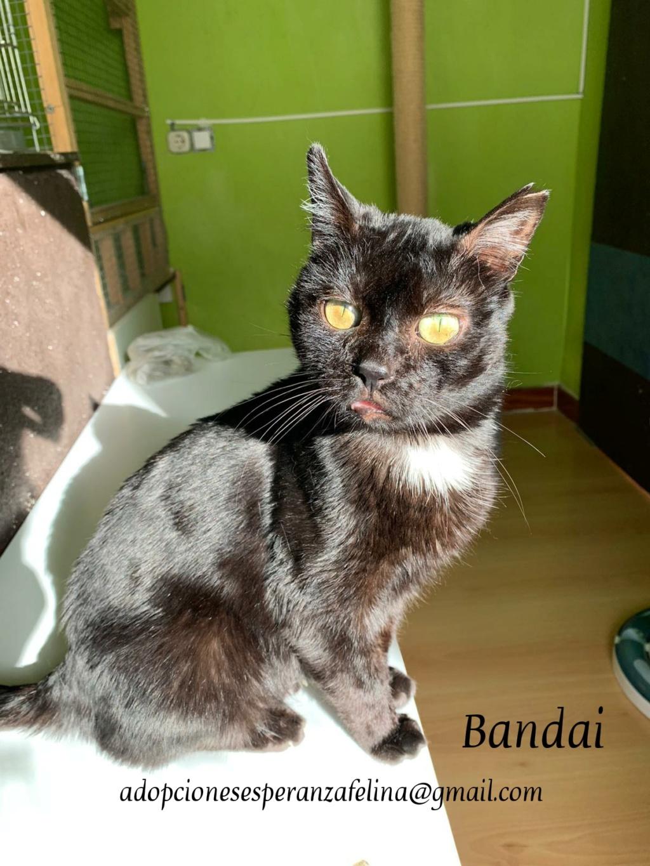 Bandai, precioso negruchi busca hogar. (F.N Aprox: 16/07/15) Photos55