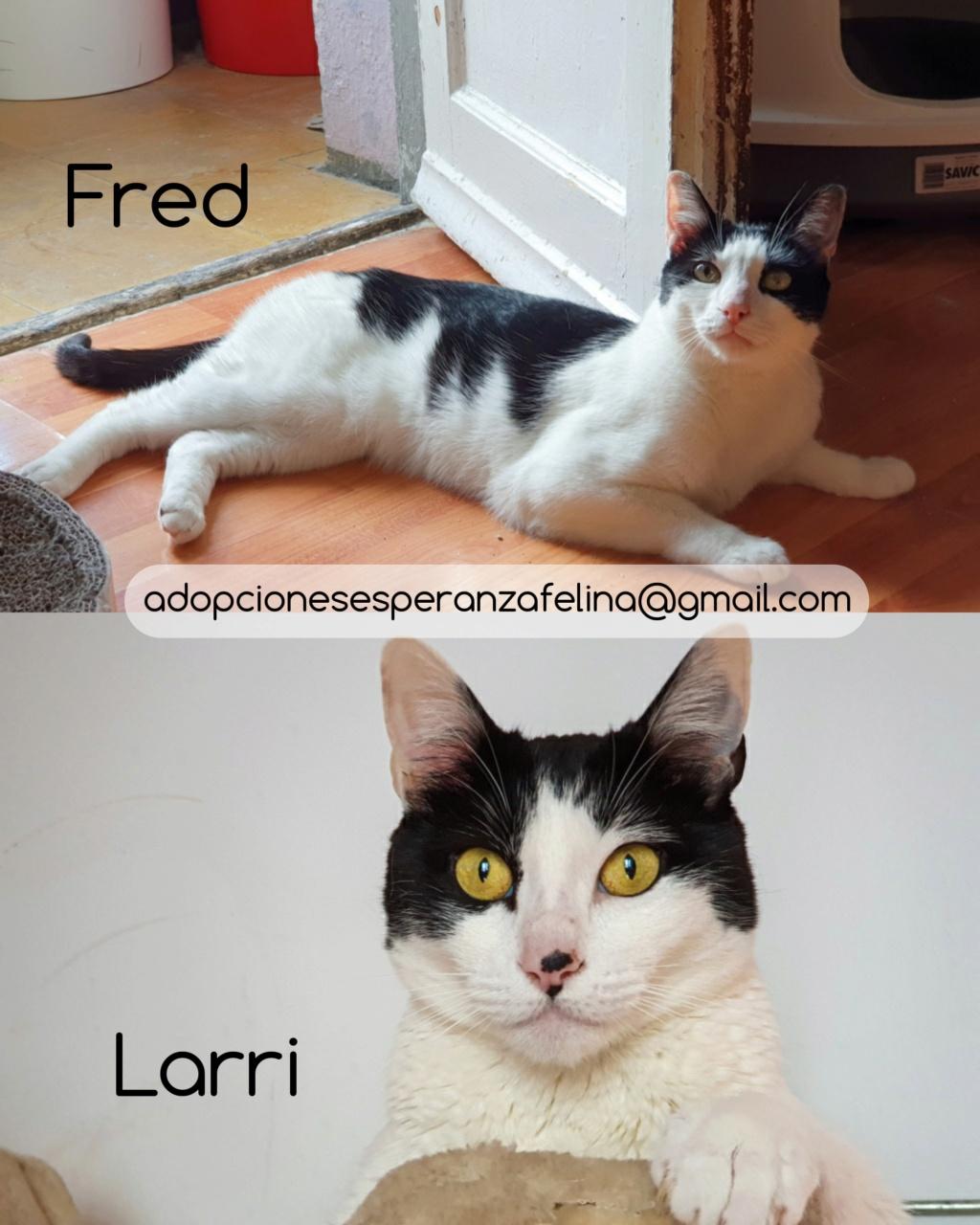 Fred y Larri, hermanitos en adopción (Álava-España f.n.aprox 09/03/15)  Photos58