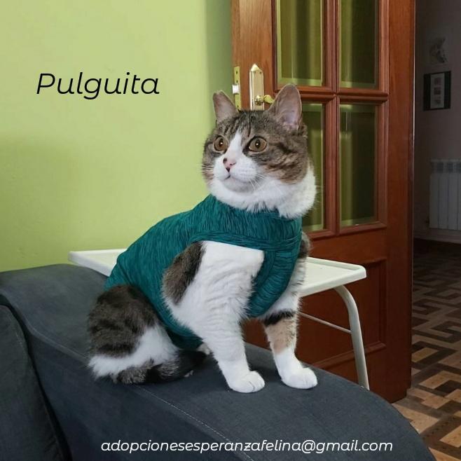 Pulguita, preciosa y mimosa gatita busca hogar. (F.N: 15/05/2012) (Positiva a inmuno + Leucemia) Álava. - Página 2 Photos60