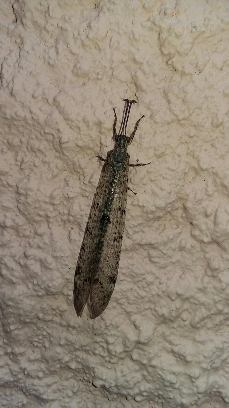 Quel est cet insecte ? 20190710