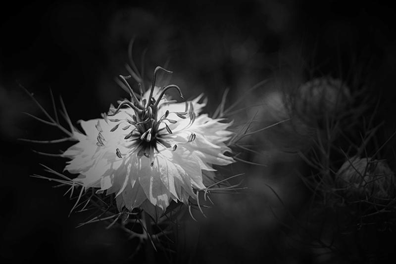 Récap du Défi S53 [2020] Fleur_11