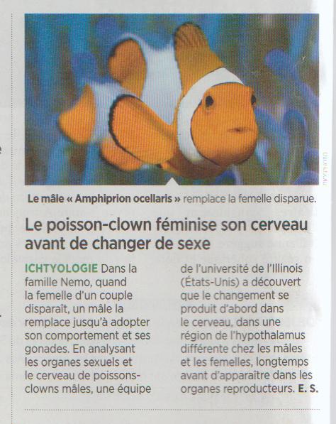 poisson transgenre Poisso11