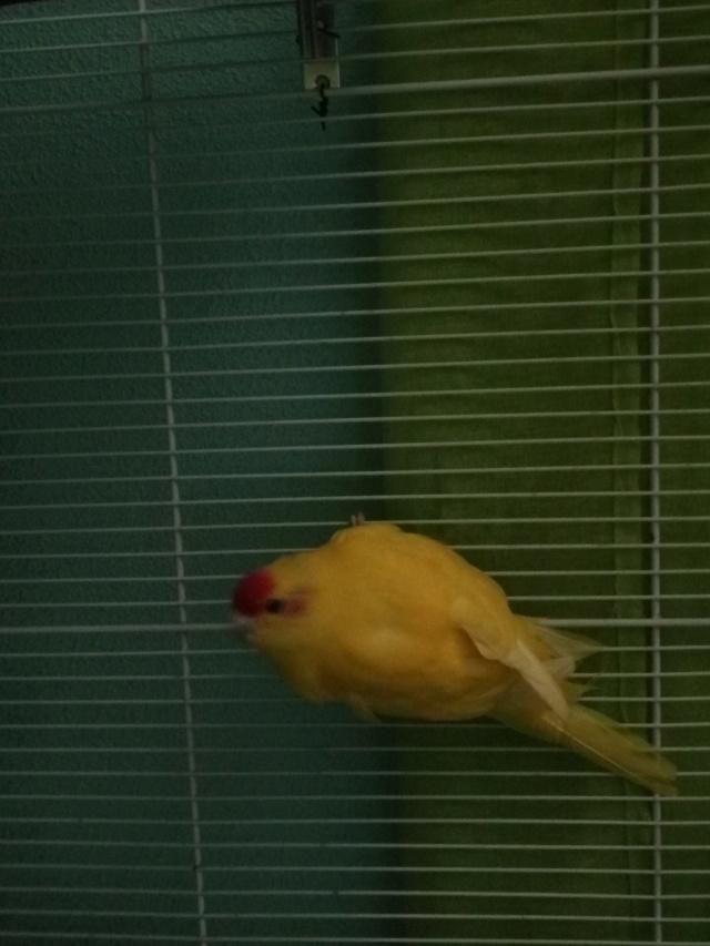 femelle ou male  Kakari10