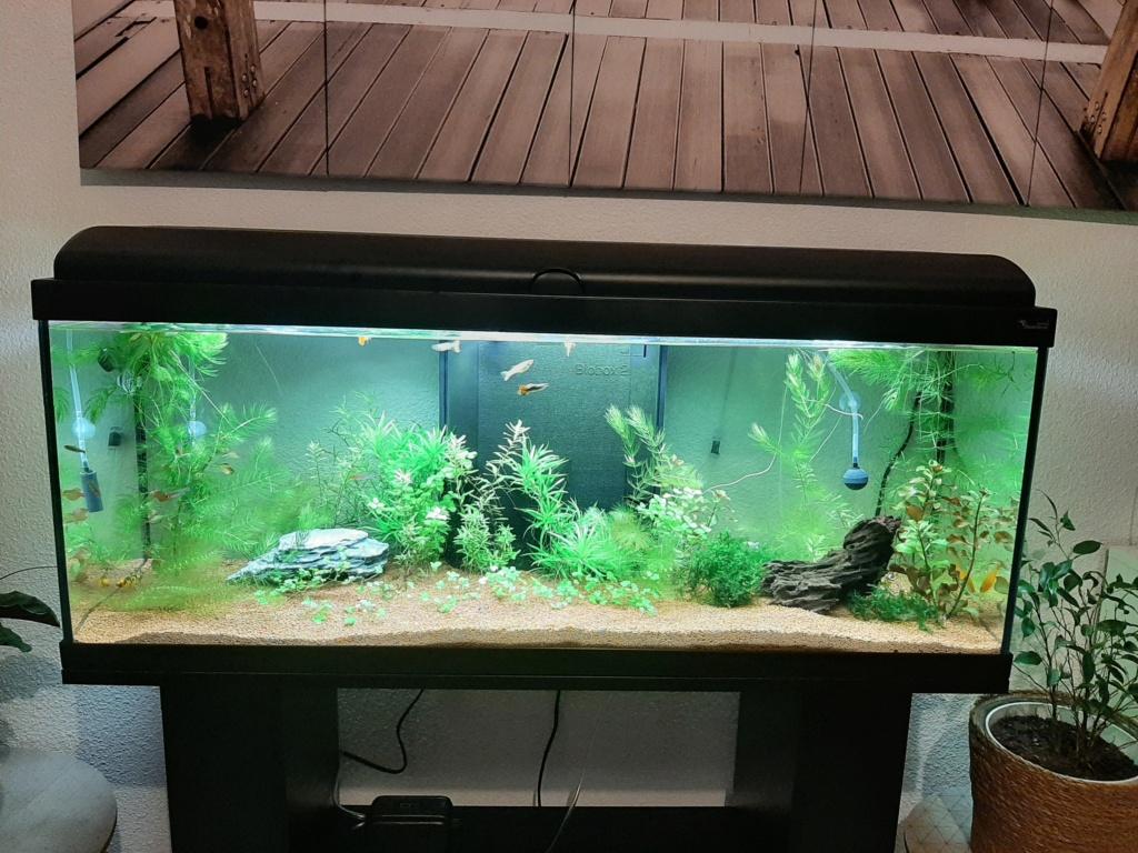 Questionnement et aide sur nouvel aquarium 20210310