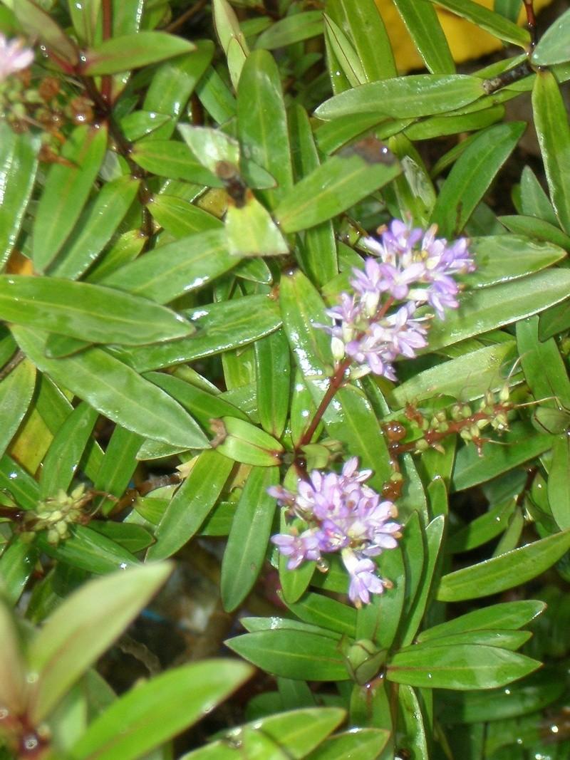 Encore quelques fleurs timides.... Pc090011