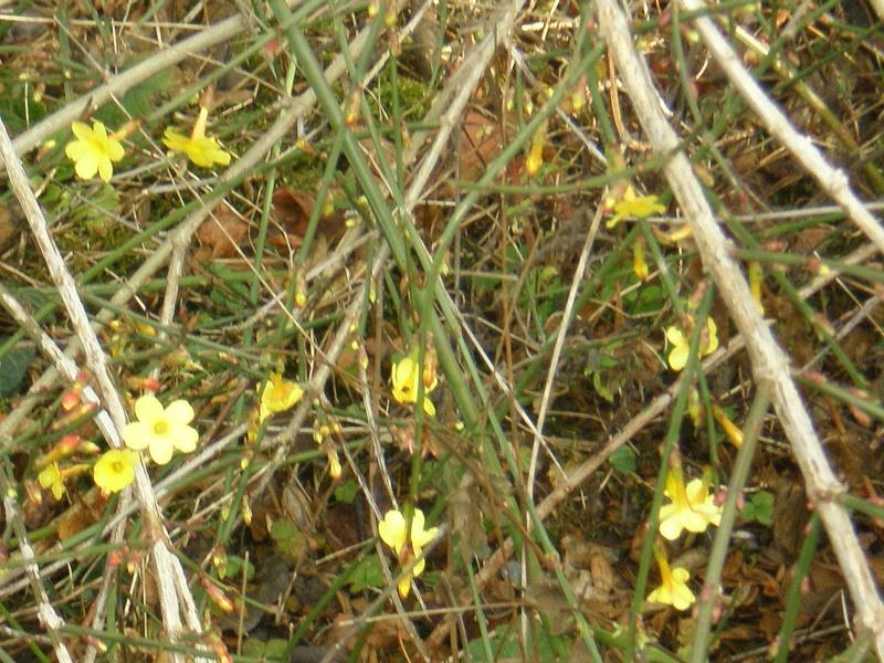 Encore quelques fleurs timides.... Pc090012