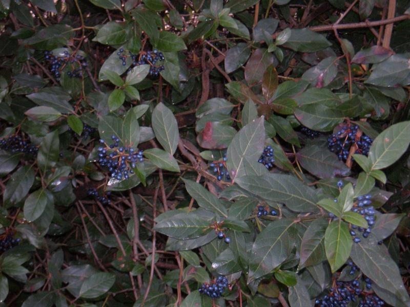 Encore quelques fleurs timides.... Pc090013