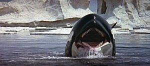 Orca Orca0910