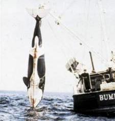 Orca Orca_o10