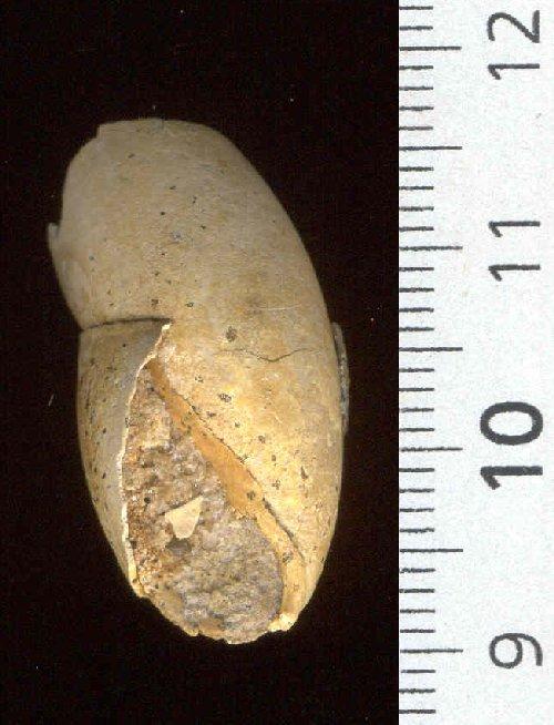 [résolu]Macrophysa sp. Gast_c10