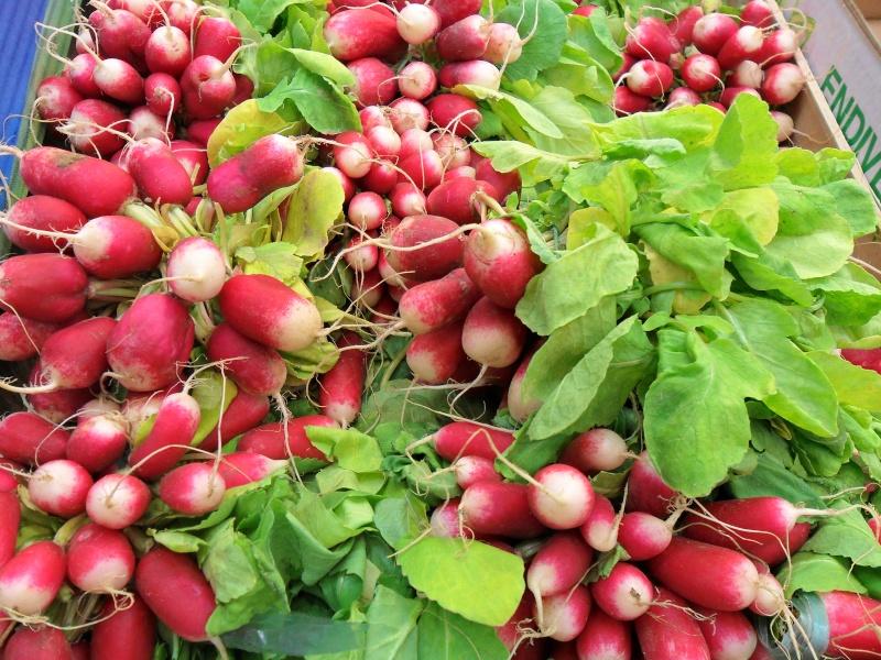 Le radis dans toute ses formes et ses couleurs Copie_11