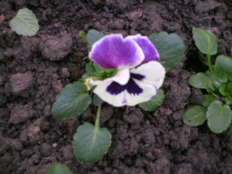 Offrons-nous une fleur ... - Page 2 Pict0014