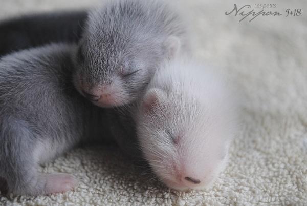 [2011] Keiko et Rita - Koshû et Kurume sont nés le 22 Mai.  - Page 2 Nippon19
