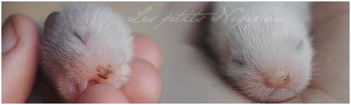 [2011] Keiko et Rita - Koshû et Kurume sont nés le 22 Mai.  - Page 2 Siggie11