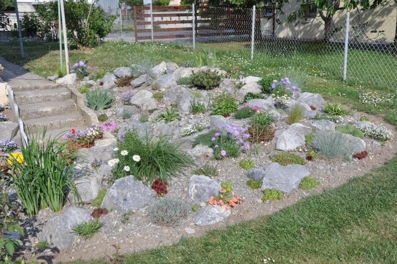 La création de ma rocaille Dsc_0013