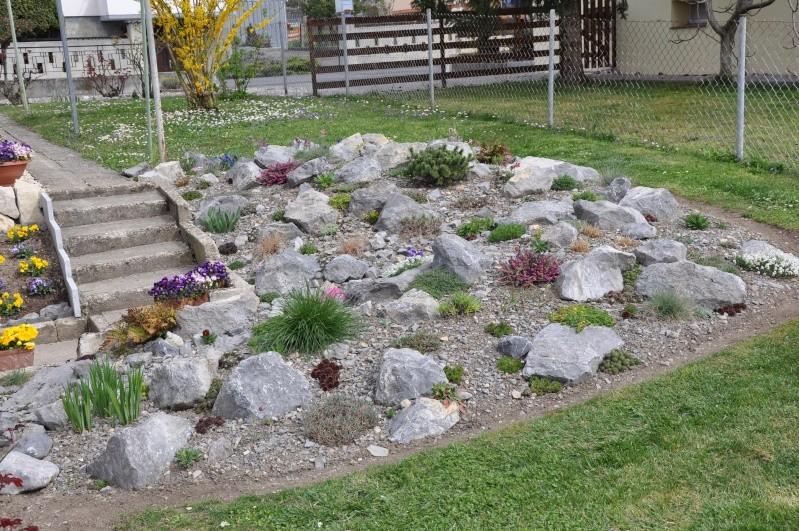 La création de ma rocaille Dsc_0210