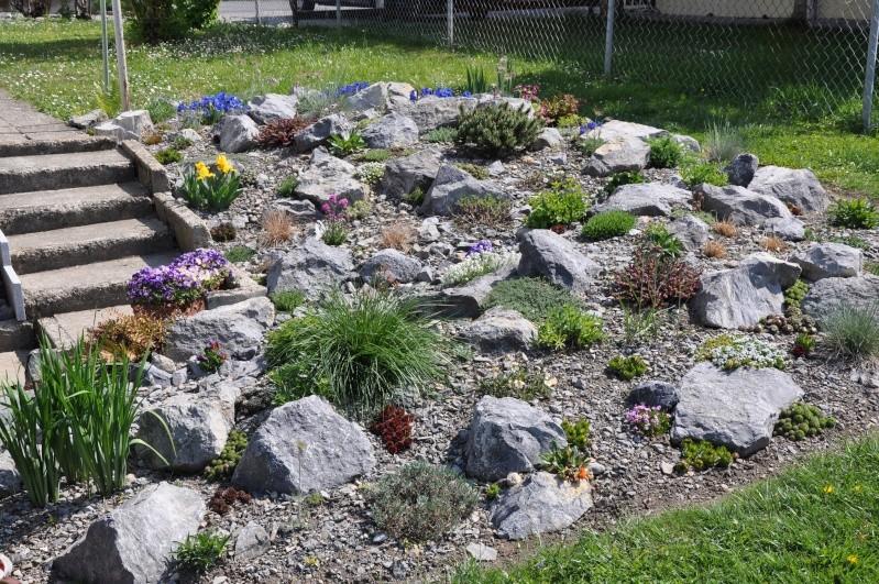 La création de ma rocaille Dsc_0310