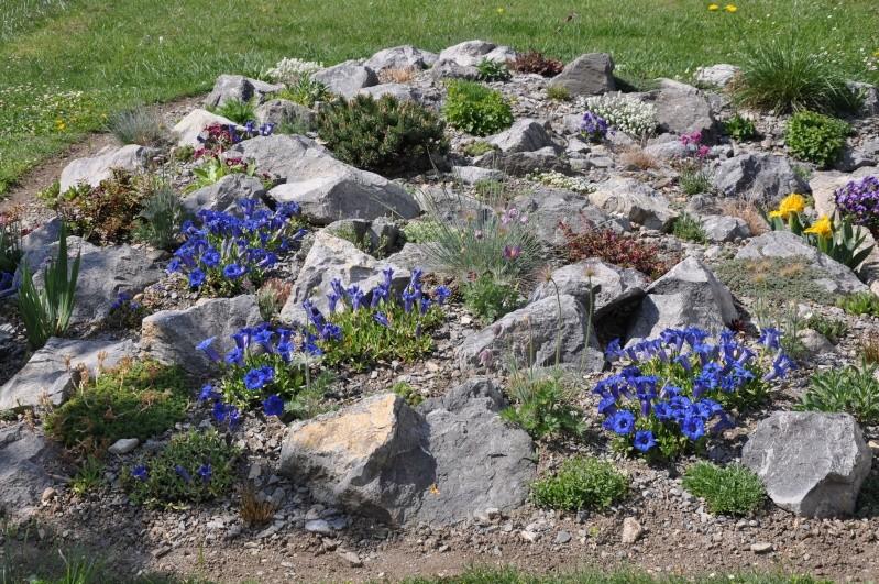 La création de ma rocaille Dsc_0311