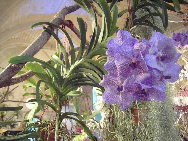 orchidées Orchid11