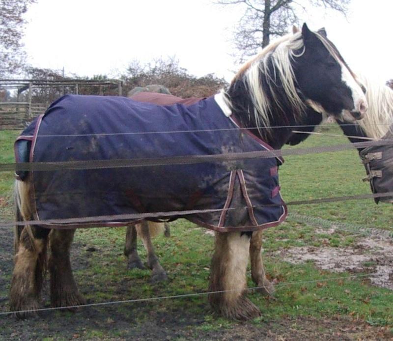 Elevage Eole, un petit élevage Breton qui monte, qui monte, Morgan10