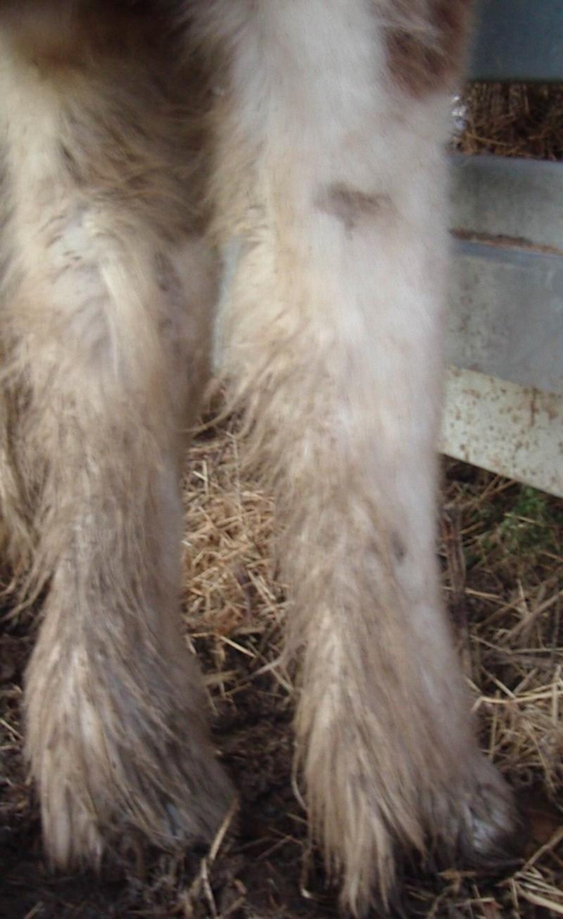 Elevage Eole, un petit élevage Breton qui monte, qui monte, To410