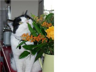 laos 1 ou 2 ans noir et blanc Getatt10