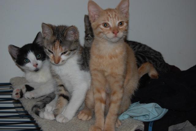 4 chatons (Mélisse, Vanille, Cacao, Saphran) Dsc_0110