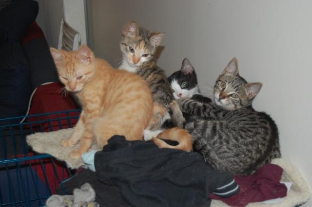4 chatons (Mélisse, Vanille, Cacao, Saphran) Dsc_0112