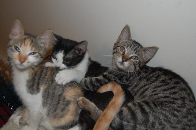 4 chatons (Mélisse, Vanille, Cacao, Saphran) Dsc_0114